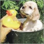 Hundepielzeug in Hülle und Fülle von www.onlinezoo.at